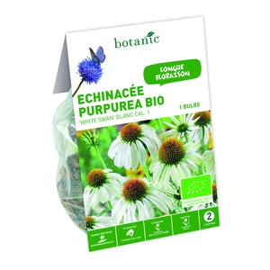 Bulbe d'Echinacee Purpurea White Swan BIO – Blanc 310283