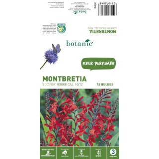 15 Bulbes de Montbretia Lucifer – Rouge 310284