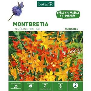 15 bulbes de Montbretia Mélange – Couleurs variées 310286
