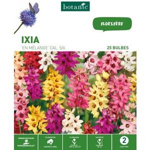 25 bulbes d'Ixia Mélange – Couleurs variées 310289