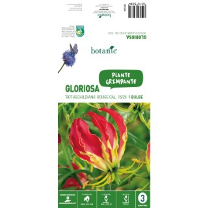 Bulbe de Gloriosa Rothschildiana - Rouge 310323