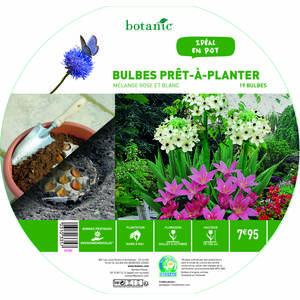 19 bulbes en mélange prêt à planter – Rose/Blanc