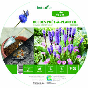 19 bulbes en mélange prêt à planter – Rose/Violet