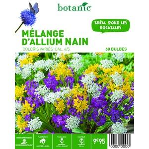 80 bulbes de Mélange d'Allium en panier – Couleurs Variées