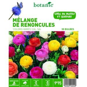 80 bulbes de Mélange de Renoncules en panier – Couleurs Variées