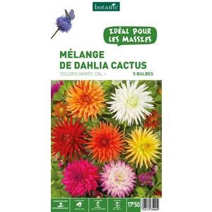 7 bulbes de Mélange de Dahlia Cactus en panier – Couleurs Variées 310349