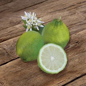 Citronnier des Antilles en pot de 3 L Bio