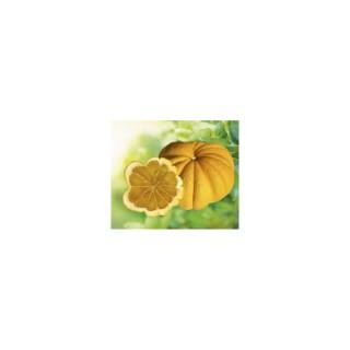 Pomme d'Adam en pot de 3 L Bio