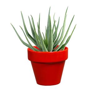 Pot horticole en terre cuite émaillée Rouge - D10 x H8.5 310722