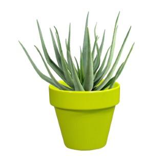 Pot horticole en terre cuite émaillée Anis - D10 x H8.5 310806