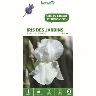 Iris des jardins blanc - 1 bulbe calibre 1