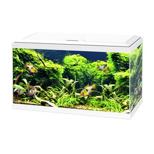 Aquarium blanc 60 avec LED 60 x 30 x 32 cm 330536