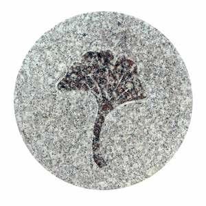 Pas fossile en granit, décor Ginko, 30 x 2 cm