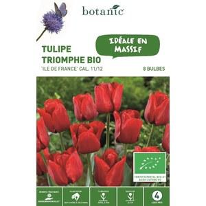 Bulbe tulipe triomphe Ile de France rouge bio botanic® x 8 334594