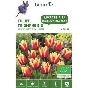 Bulbe tulipe triomphe Jan Seignette rouge et jaune bio botanic® x 8 334596