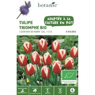 Bulbe tulipe triomphe Leen van der Mark rouge et blanc botanic® x 8 334600