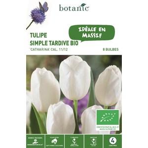 Bulbe tulipe simple tardive catharina jaune bio botanic® x 8 334610