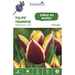 Bulbe tulipe triomphe gavota violet et jaune bio botanic® x 10 334633