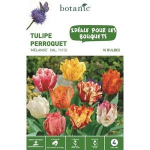 Bulbe tulipe perroquet en mélange multicolore botanic® x 10 334637