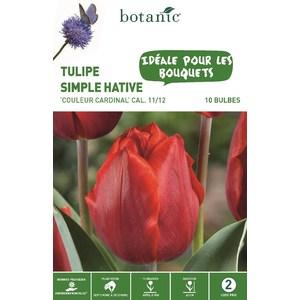 Bulbe tulipe simple hative couleur cardinal rouge botanic® x 10 334652