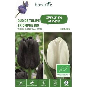 Bulbe duo de tulipe triomphe noir et blanc bio botanic® x 8 334676