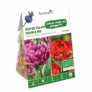 Bulbe duo de tulipe double violet et rouge bio botanic® x 8 334682