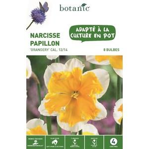 Bulbe narcisse petite couronne orangery botanic® x 8 334710