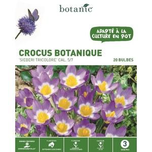 Bulbe crocus botanique sieberi tricolore violet bio botanic® x 20 334725