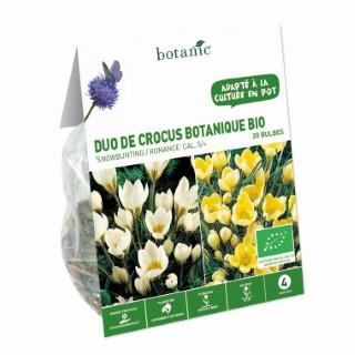 Bulbe duo de crocus botanique blanc et jaune bio botanic® x 20 334727
