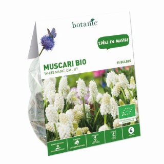 Bulbe muscari white magic blanc bio botanic® x 15 334731