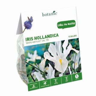 18 bulbes d'Iris Hollandica Blanc calibre 7/8 334734