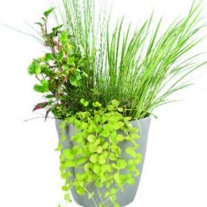 Composition 3 plantes avec anse