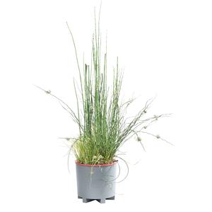 Composition 4 plantes avec anse