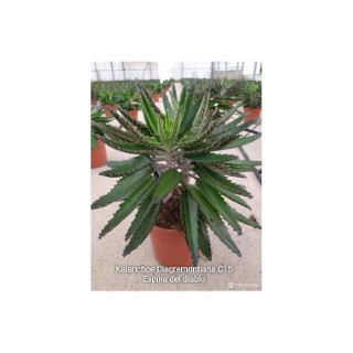 Ramasse fruits Gardena Combisystem gris 370984