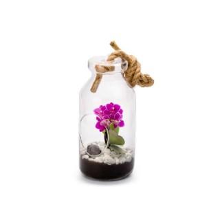 Terrarium Bottle L en verre à poser ou suspendre Ø 12 x H 25 cm 371720