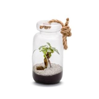 Terrarium Jeroboam L en verre à poser ou suspendre Ø 14 cm x H 28 cm