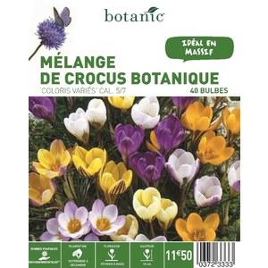Mélange Crocus Botanique en panier 372333