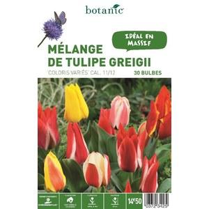 Mélange Tulipe greigii en panier 372342