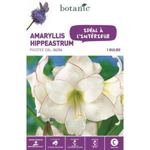 Bulbe pour intérieur amaryllis picotée rose botanic® 372372