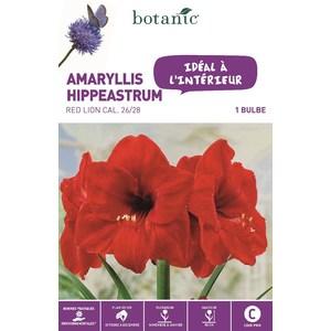 Amaryllis Red Lion 372374