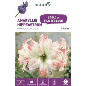 Bulbe pour intérieur amaryllis aphrodite blanche botanic® 372377