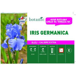 Iris Germanica Fleurs de France en vrac 378852
