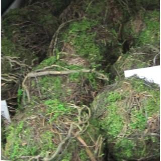 Boule naturelle en brindille et mousse verte. La boule 379112
