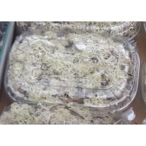 Boîte de mousse lychens. La boîte 379118