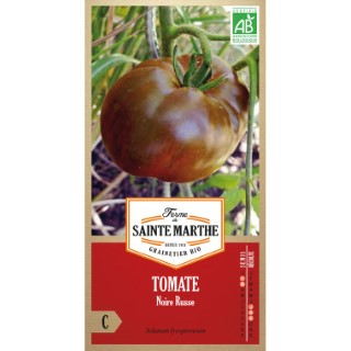 Tomate Noire Russe 382792