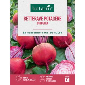Semences potagères pour betterave chioggia 386129