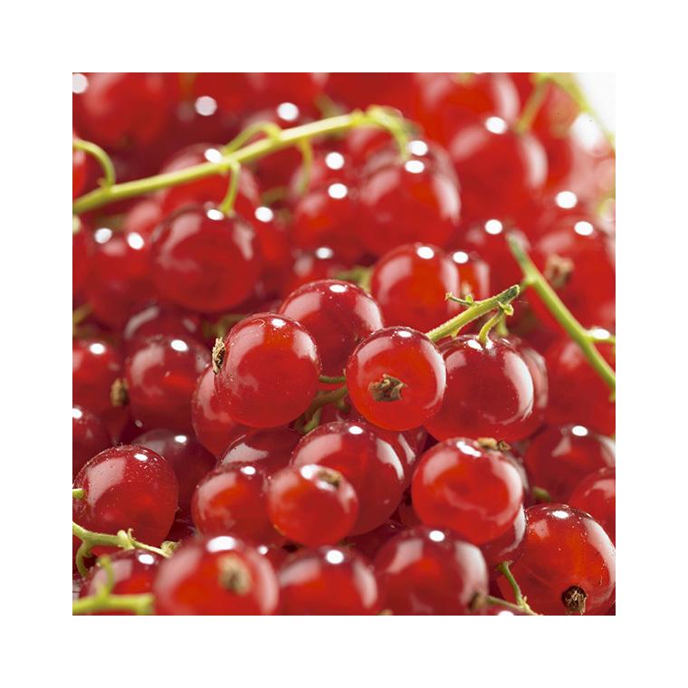 Groseillier Agate Rouge en conteneur de 5 L 300919