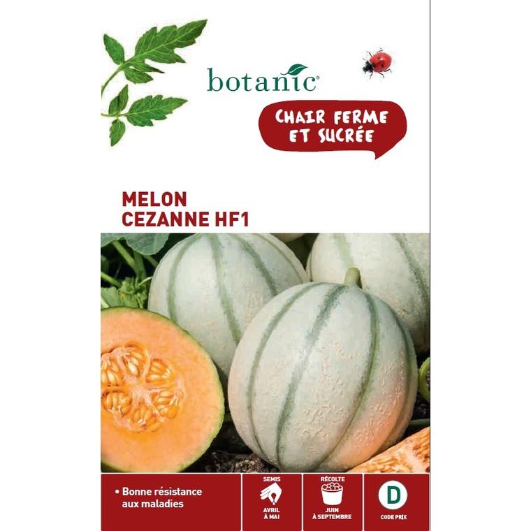 Melon cezanne hybride f1 310091