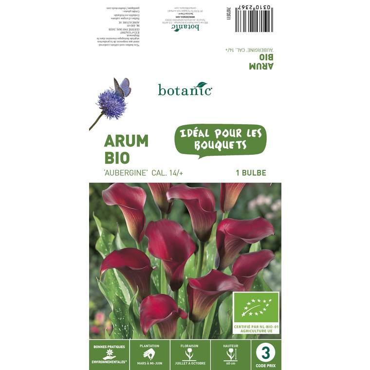 Bulbe d'Arum Aubergine BIO - Violet 310236