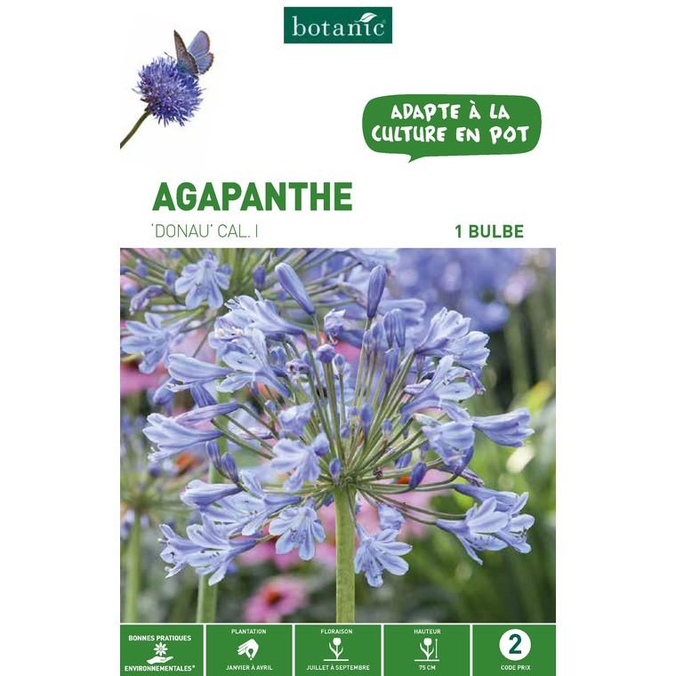 Bulbe d'Agapanthe Donau - Bleu 310245